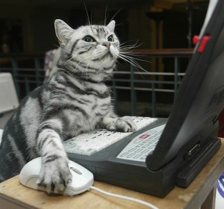 cat-on-computer